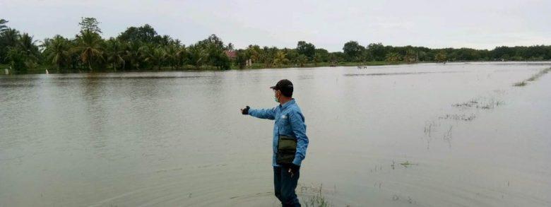 Sekitar 1.290 Ha Sawah di Mempawah Terendam Banjir